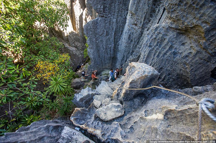 9. И вот он — первый взгляд на каменный лес Цинги. У каждого второго из груди вырывается востор