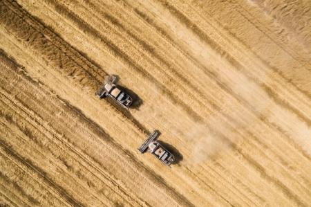 Рекордный урожай угрожает Российской Федерации недостатком мощностей для хранения зерна— руководитель зернового союза