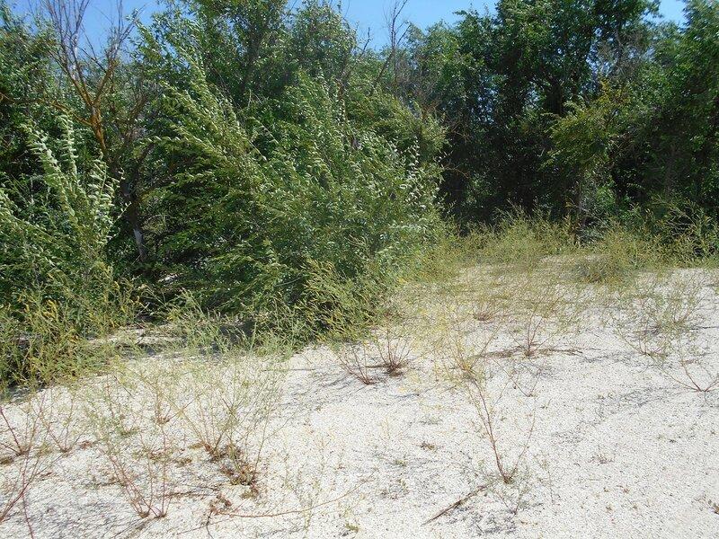 Лес, пески ... DSCN6855.JPG