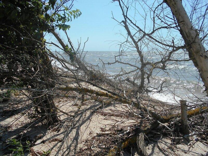 Лес у моря ... DSCN6874.JPG