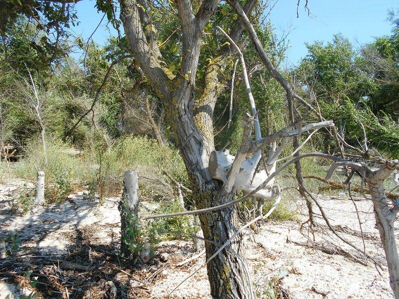 В лесу ... DSCN6877.JPG