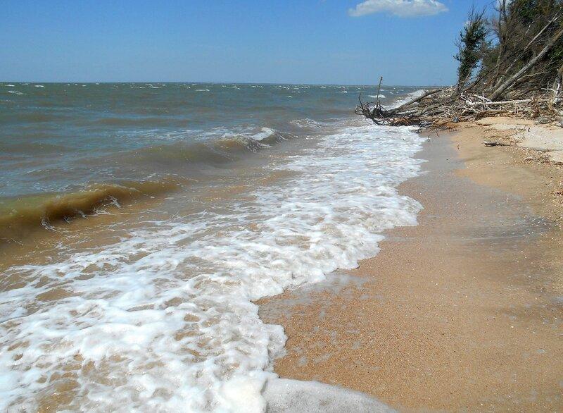 Движенье вод прибрежных ... DSCN6883.JPG