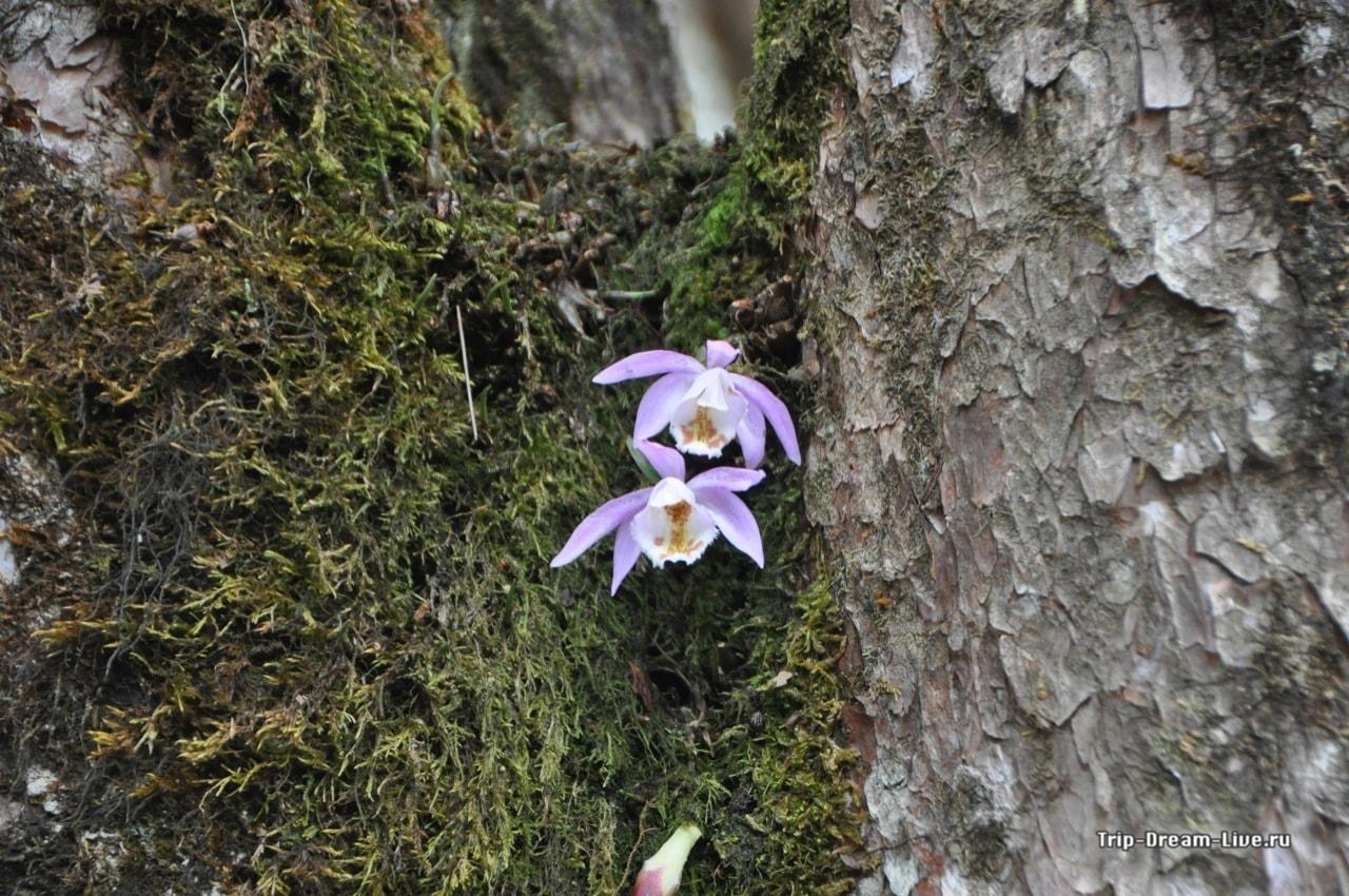 Орхидеи растущие на деревьях