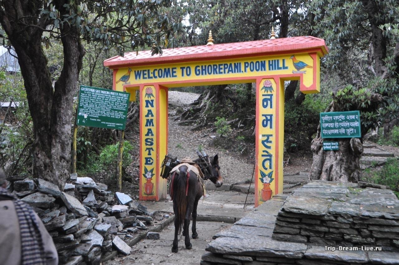 Главные труженики непальского села