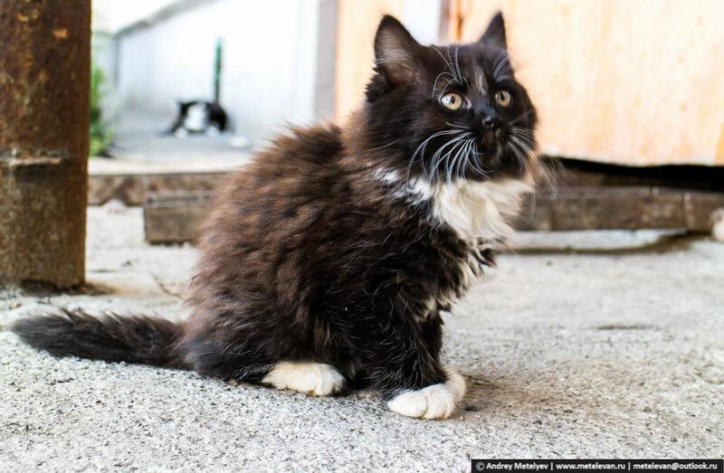 бездомный котенок живущий в нашем дворе