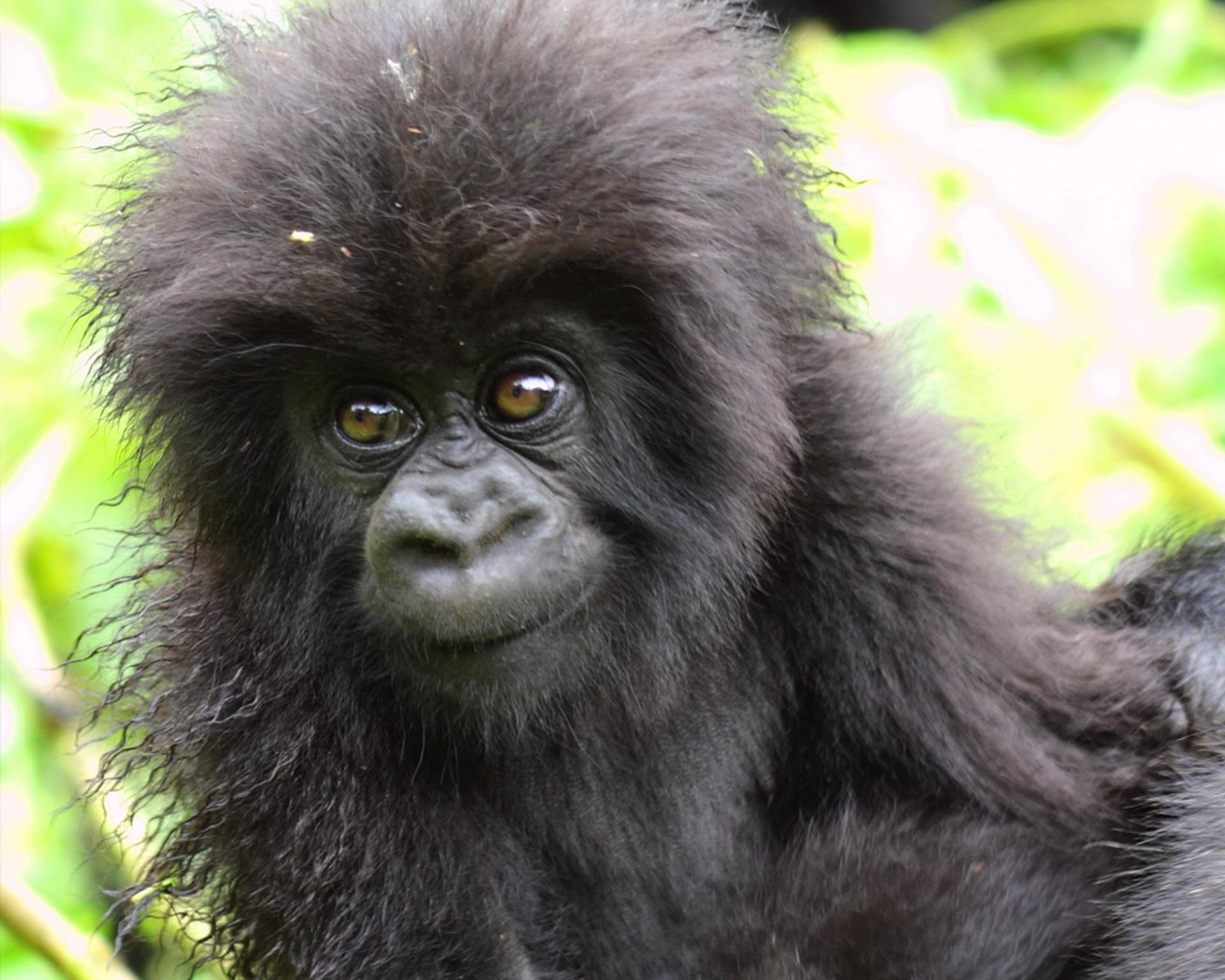 Пухнастий горилленок