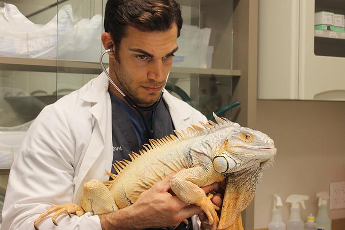 Ну разве это не самый сексуальный ветеринар?