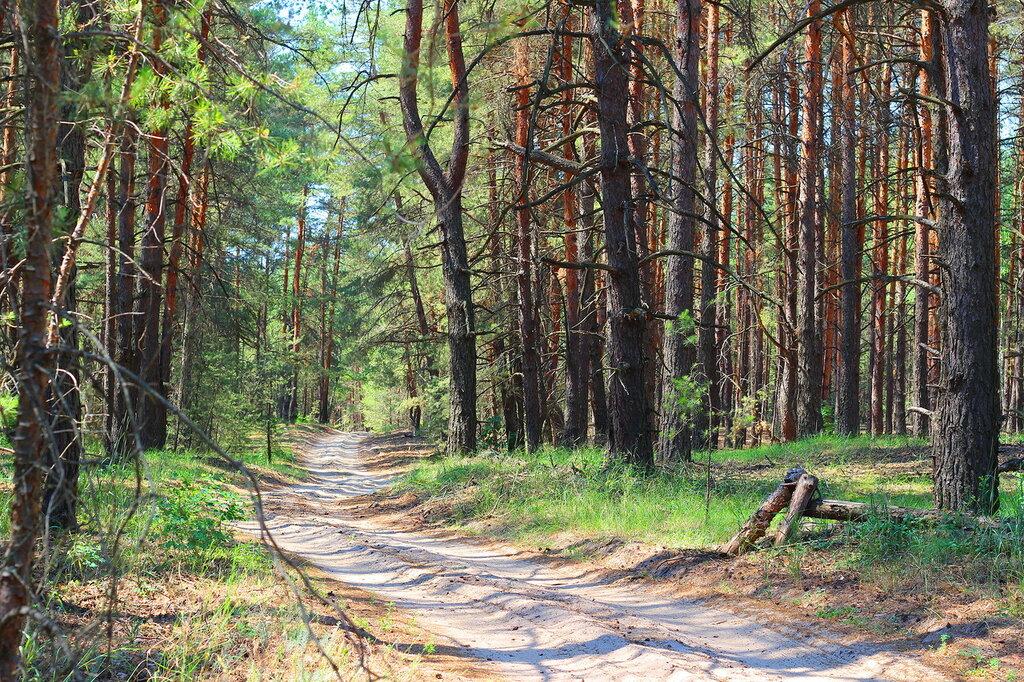 Леса воронежской области картинки выбрать экшн-камеру