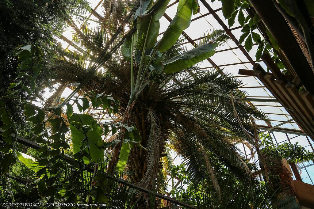 "Botanical Garden of Perm University. plants, professor, university, Ural, tree, here, Genkel, total, Perm, tropics "", name, Botanical, morphology, systematics, about, species, Botanical, large, varieties, plot"