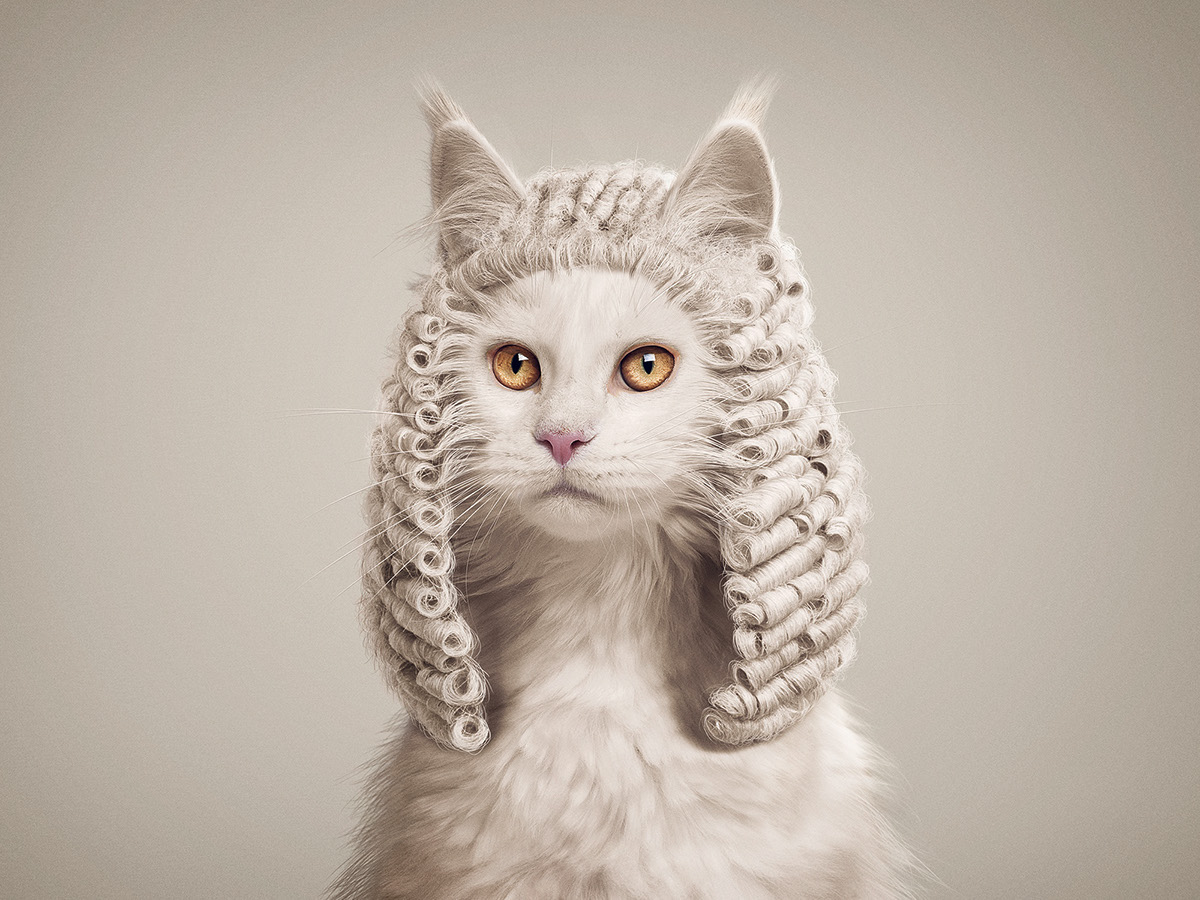 If Animals Could Judge