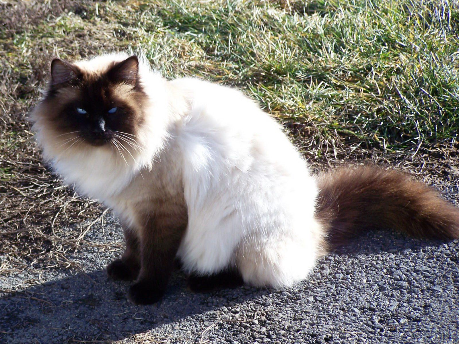 Агресивна кішка