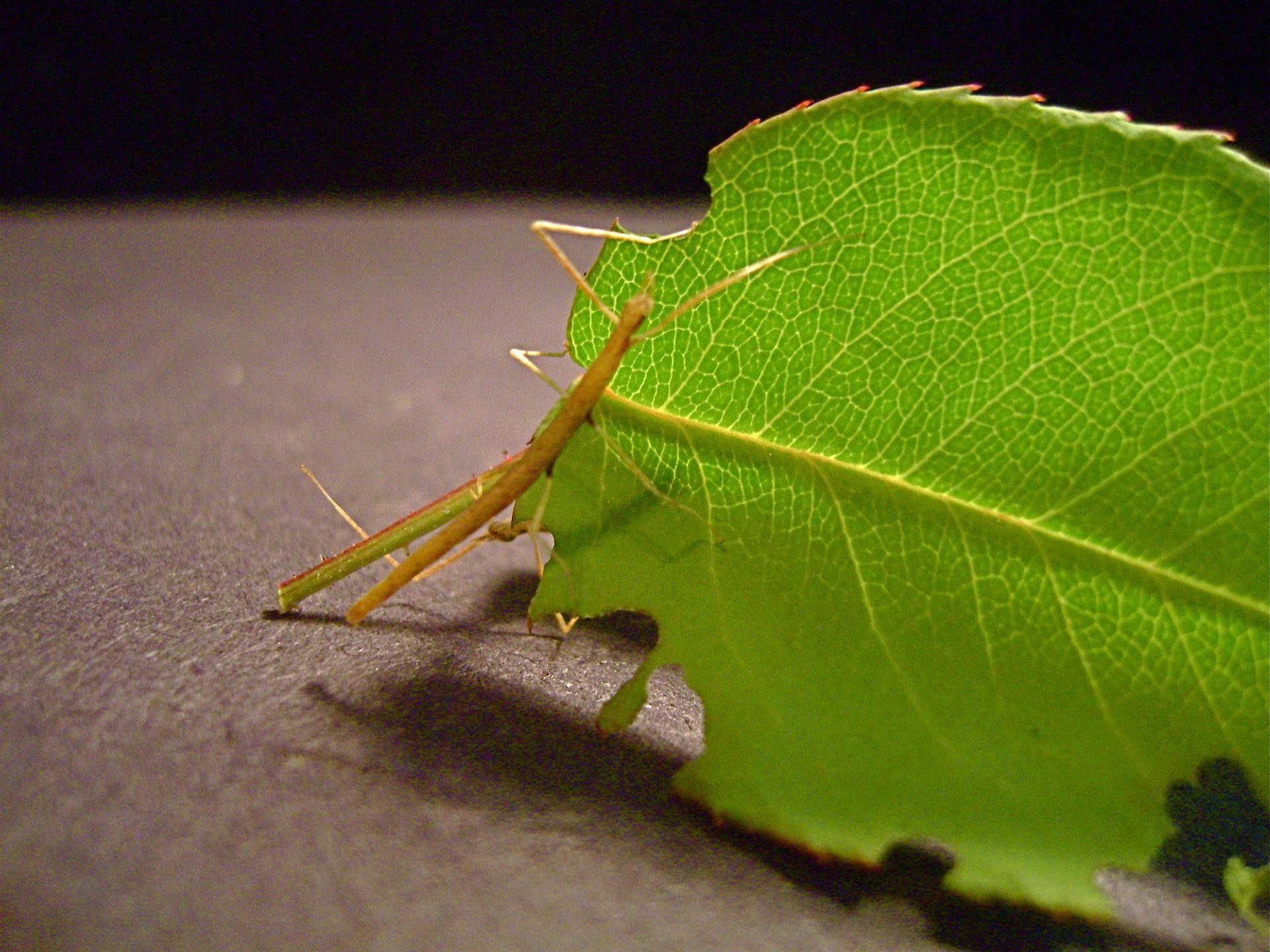 З листочком