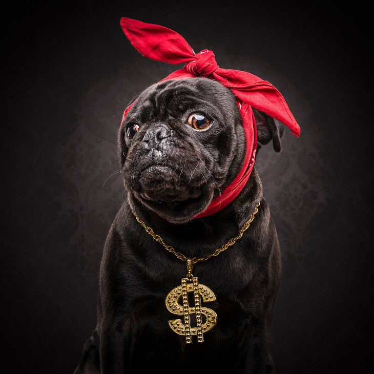 1. Мопс — маленькая декоративная собачка, которую издавна держала знать. Собака с живым, весёлы