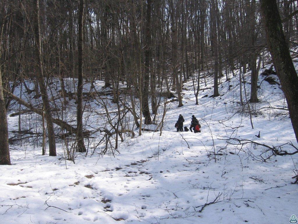 В зимнем лесу