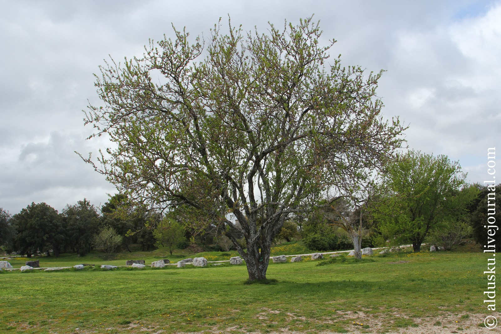 Тут даже ветки деревьев извилисты как мысли их умершего владельца