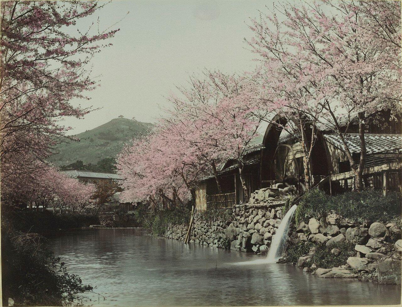 Речной пейзаж весной