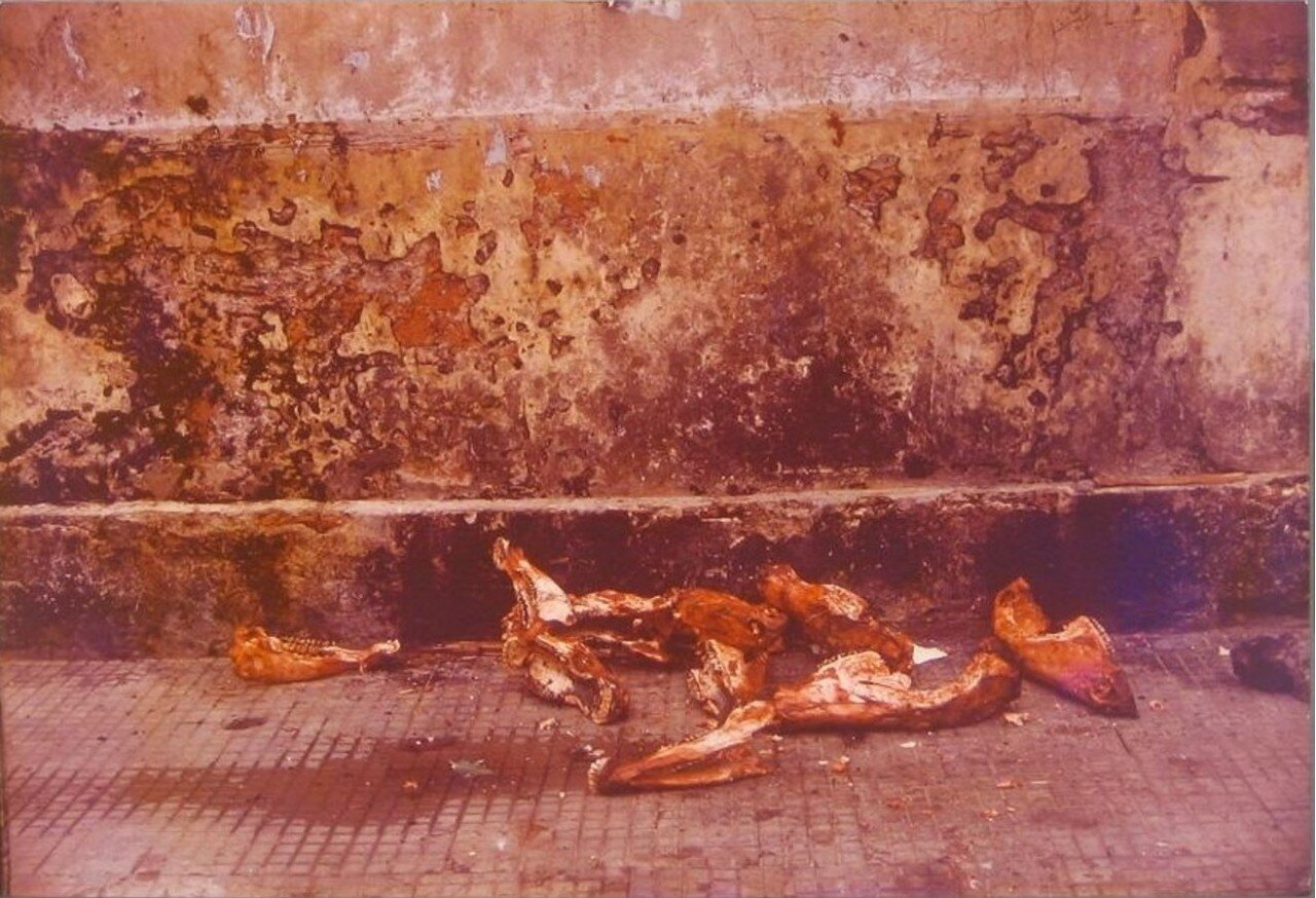 1960. Останки лошади на полу в нижней части стены