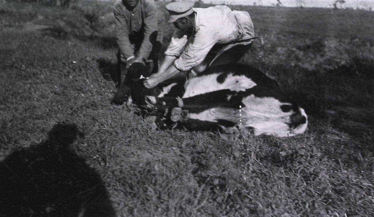 Скотобойня