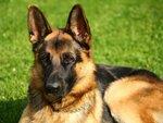 Неласова Вероника 4 «Г» класс  Неласов Максим 4 «Г» класс  Жучка.  Однажды летом 2014 года, около нашего загородного дома мы нашли собаку, у нее не было хозяина. Собаку мы назвали Жучкой. Жучка была добрая и ласковая. Что бы найти ей хозяина мы дали