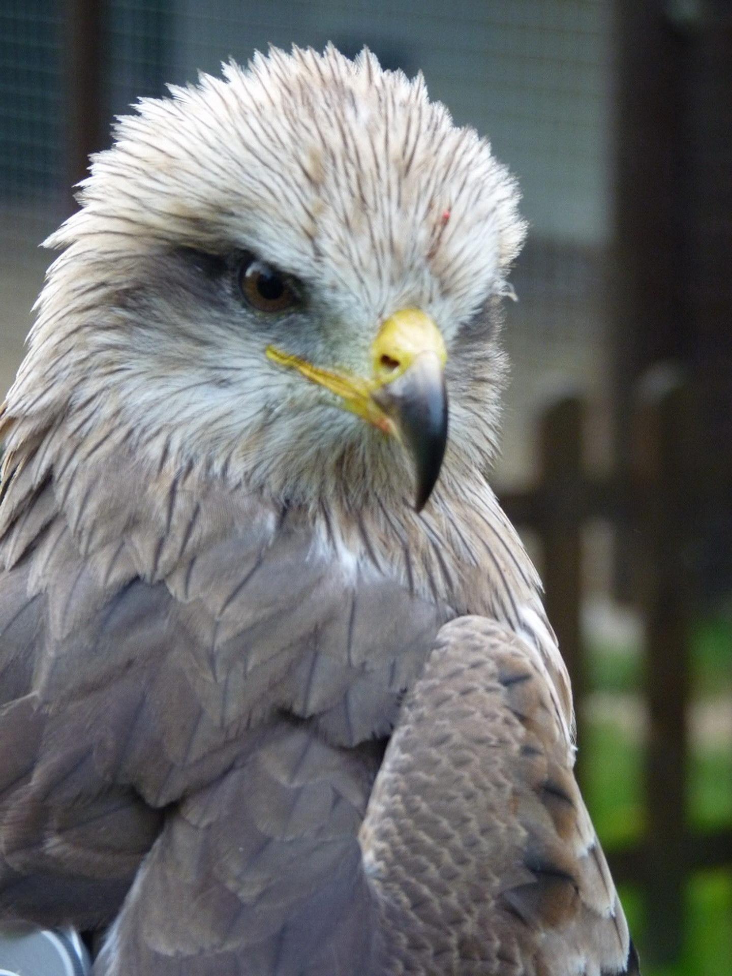 Красивий птах