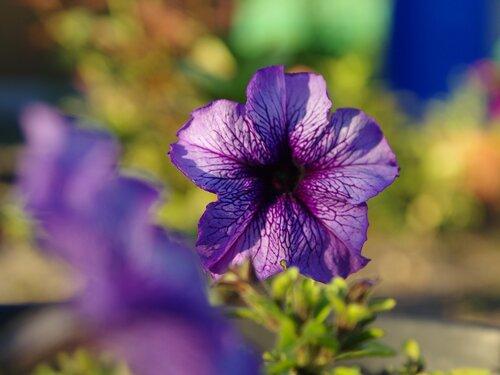 в фиолетовых тонах