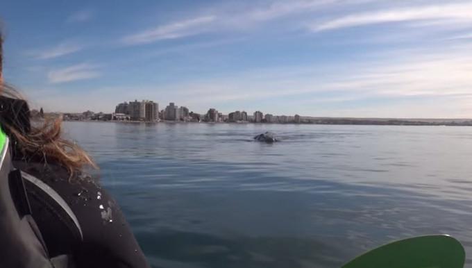 Огромный кит поднял из воды байдарку