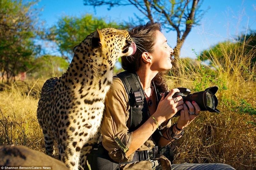 Леопард ласкается к Шеннон во время сафари в Южной Африке.