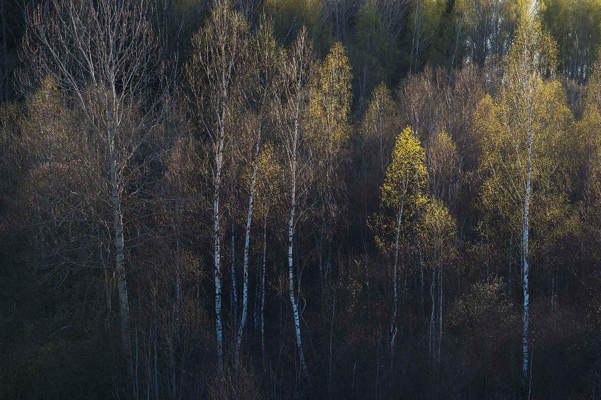 Фото: Дмитрий Вилюнов Фото: Rimantas Bikulcius