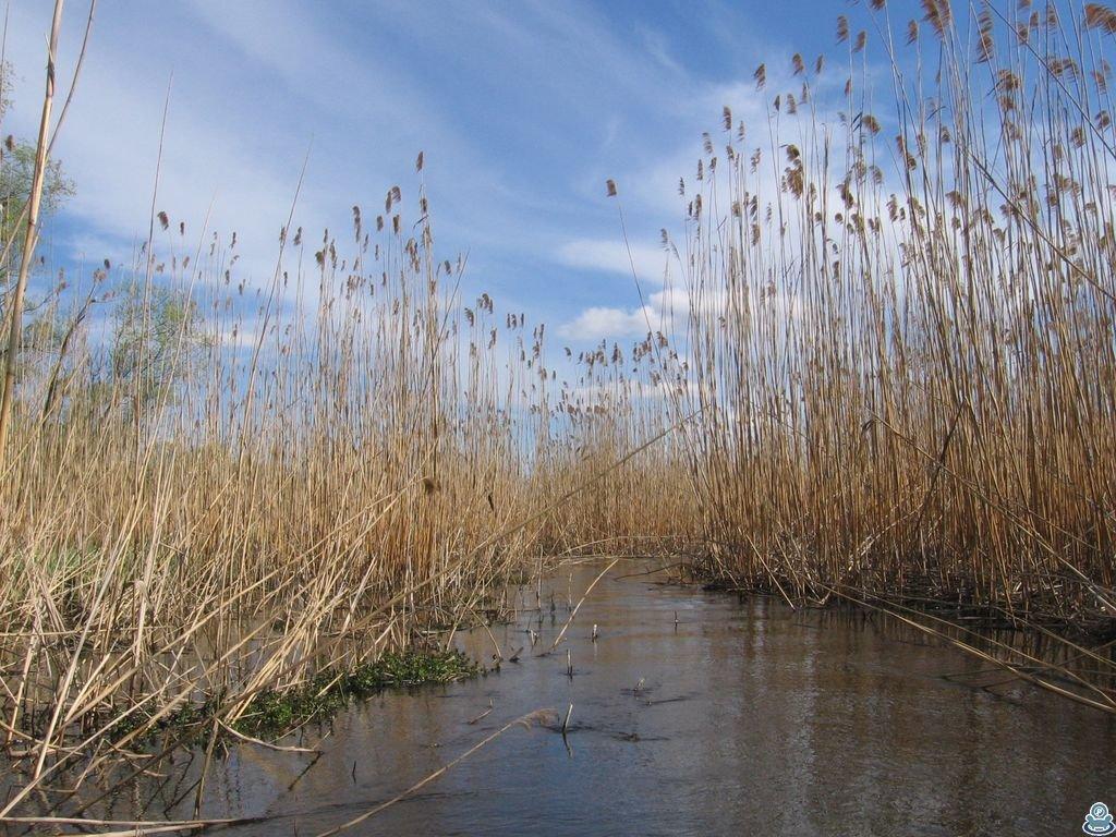 Плавни реки Боромля