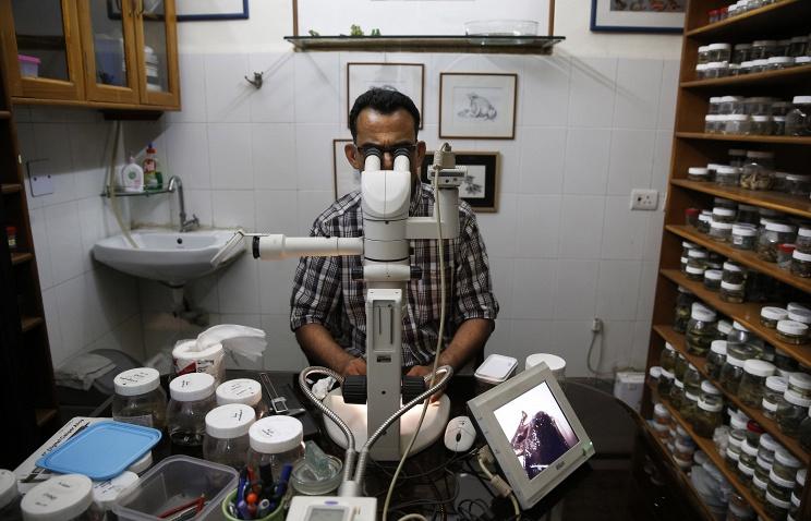 Ученые впервый раз вырастили кожу изстволовых клеток