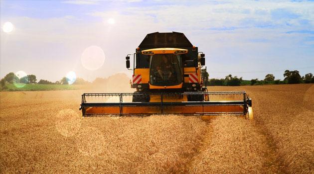 Урожай вОмской области убирают значительно скорее, чем в2014-м году