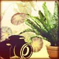 Домашние цветы. Фото