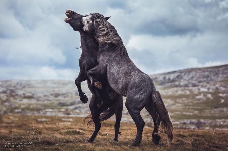 Фотограф Карина Майвальд и ее прекрасные лошади