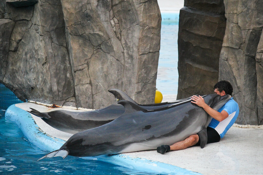 дельфинарий, Батуми