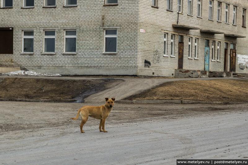 собака в селе Каменноозерское