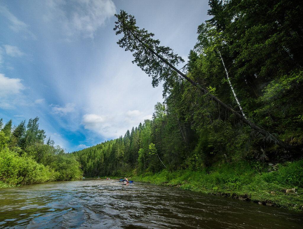 Сплав по реке койва, красоты, дерево нависает над рекой