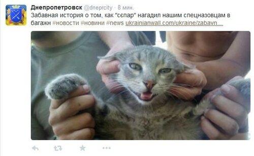 FireShot Screen Capture #3171 - '(20) Твиттер' - twitter_com.jpg
