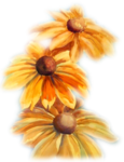 Tube375_Yellow_Daisies_05_08_Sharlimar.png