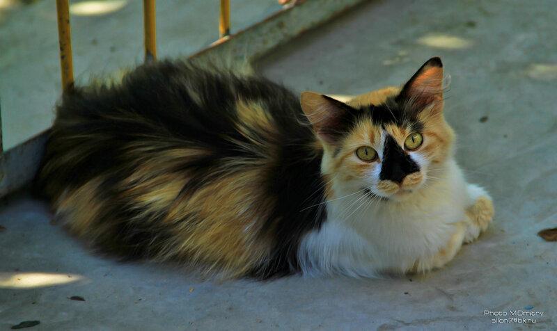 Коты & кошки (2010)