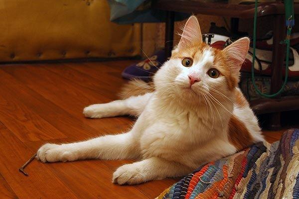 Кошачьи Святыни