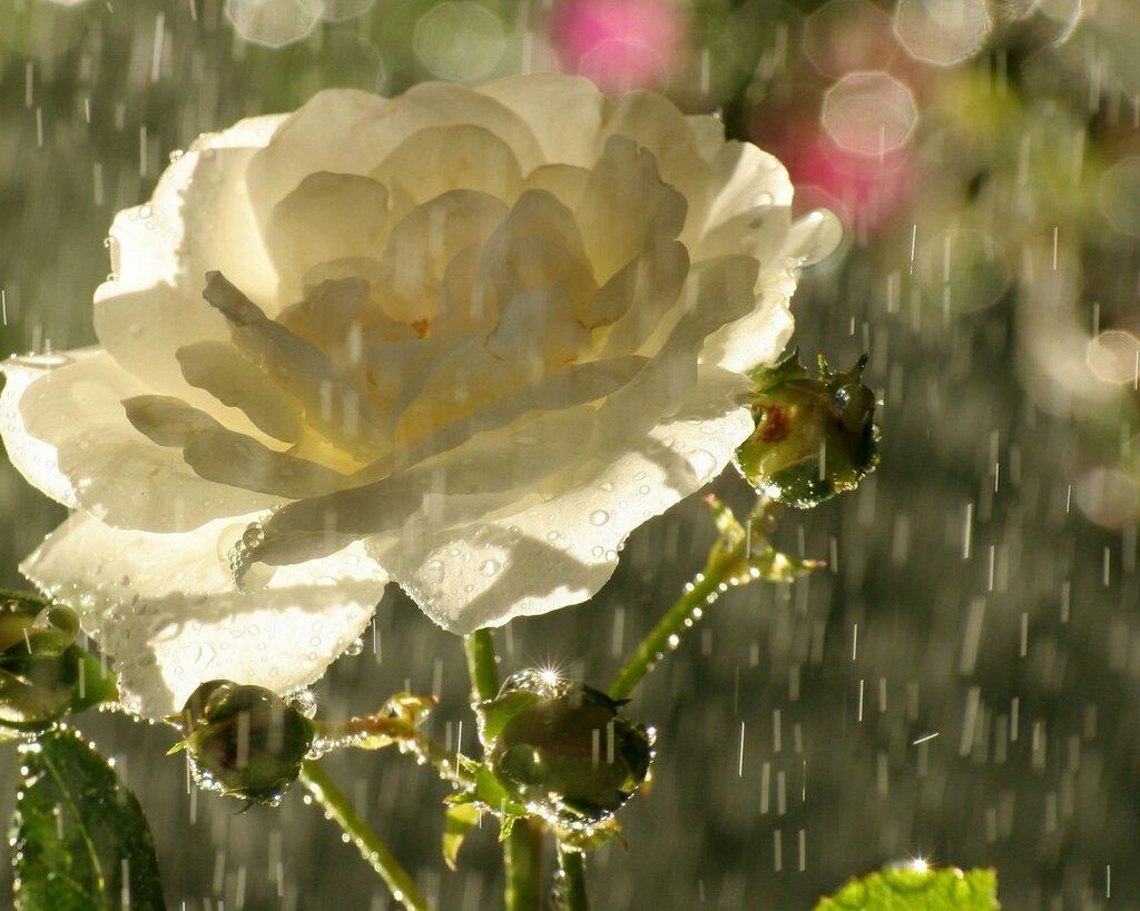 Flowers-Rain-Shines-2048x2560.jpg