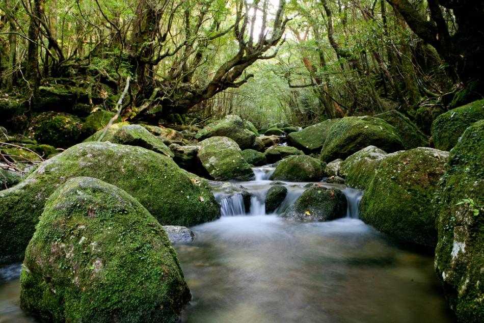 Удивительные древние леса