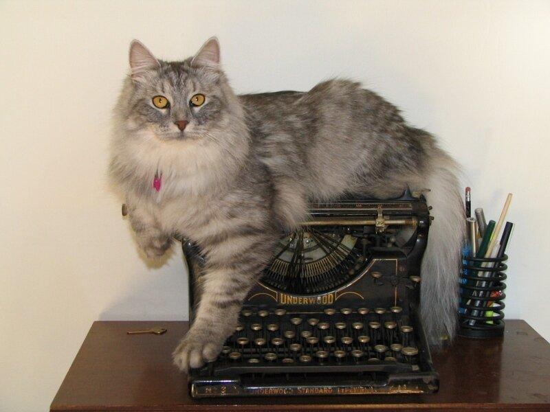 характер сибирских кошек история