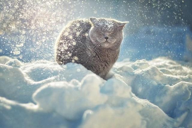 100 самых красивых зимних фотографии: пейзажи, звери и вообще 0 10f5cc e0fe8f58 orig