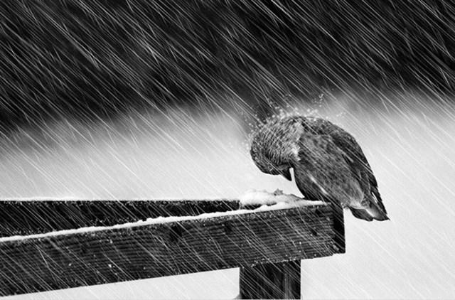100 самых красивых зимних фотографии: пейзажи, звери и вообще 0 10f5d1 3a0511b0 orig