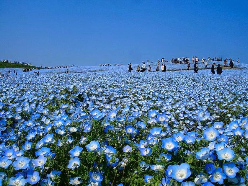 Живописный японский парк Хитати Кайхин 0 1422ee 7cfd27f8 orig
