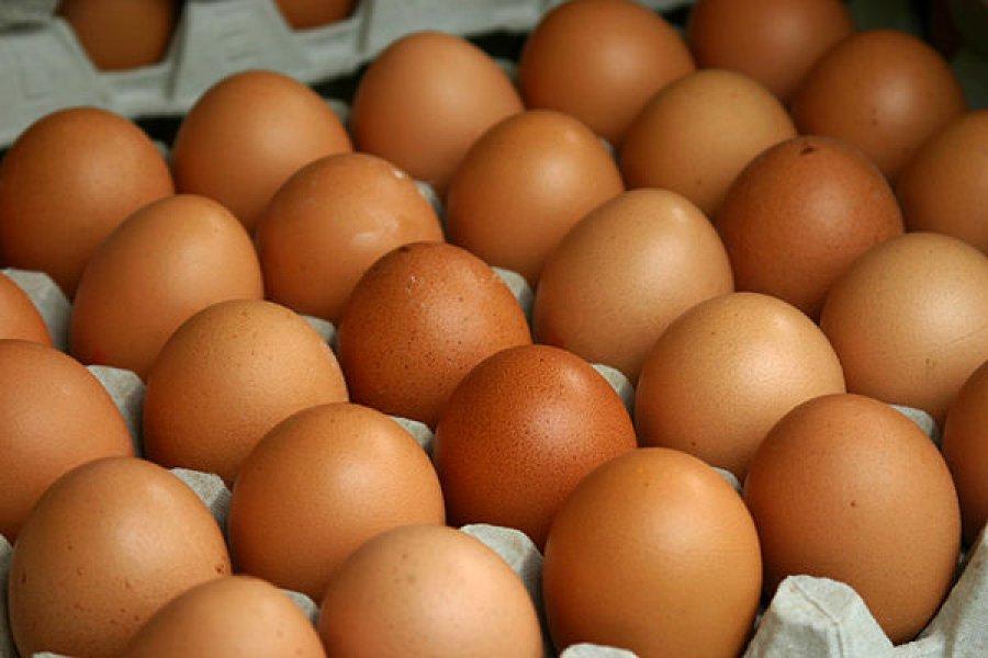 На Брянщину не пустили 300 тысяч куриных яиц из Белоруссии