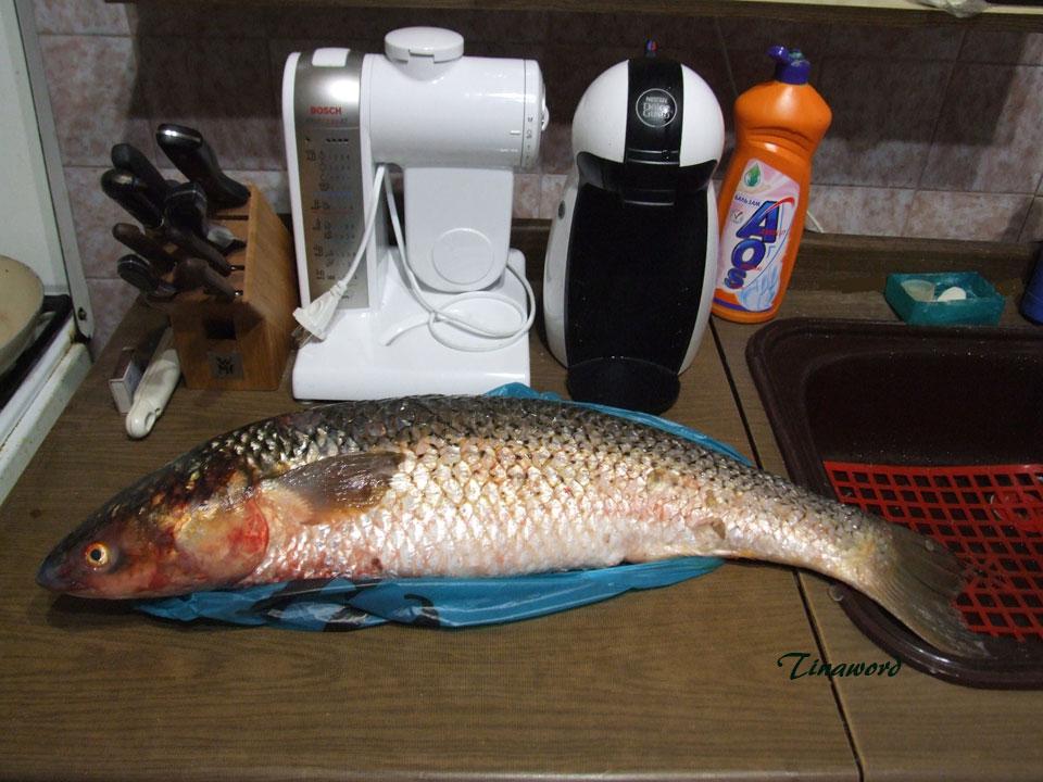рыба-5.jpg