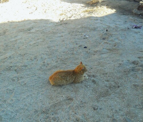 На песке ... SAM_4583.JPG