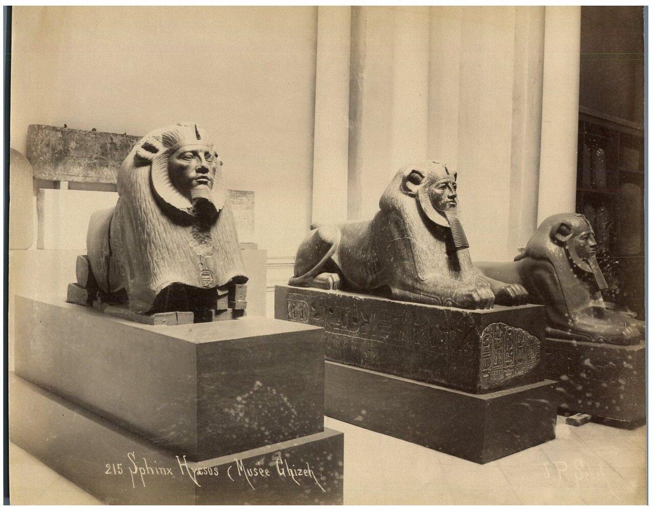 Сфинксы в музее Каира